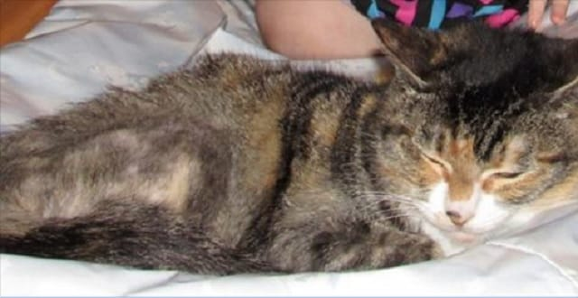 Homeless Couple Searches for Beloved Cat After Rental Truck Stolen from Park-&-ride Lot!