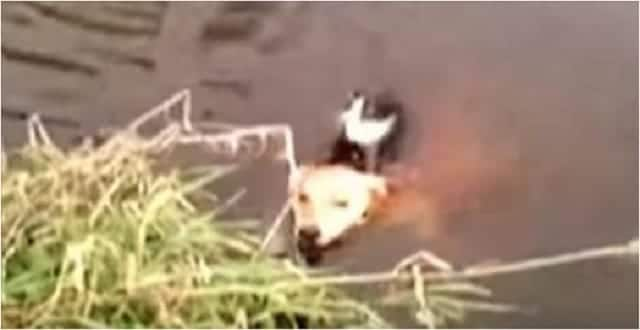 This Cat Was Drowning in a River Until an Unlikely Rescuer Showed Up!