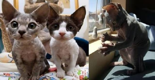 These 9 Photos Show Hairless Kitties Are Super Adorable!