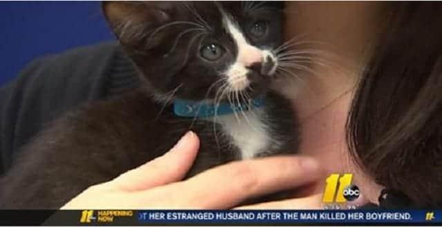 North Carolina Police Employee Saves Kitten in Distress!