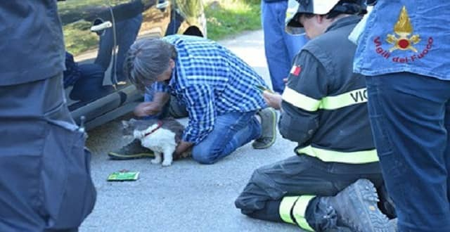 Cat Rescued After 32 Days Trapped in Italy's Quake Rubble!
