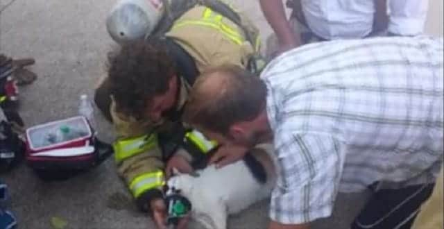 People Are Heaping Love on Firefighters Who Brought Cleo the Cat 'Back to Life'!