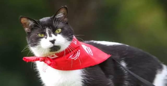Chance the cat photographed at the Wiggle Waggle Walkathon on Sept. 11, 2016. (Photo by Rohit Saxena)