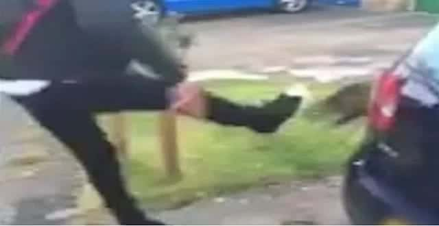 UPDATE: Cops Arrest 16-year-old from London As They Probe Sickening New Cat-kicking Craze!