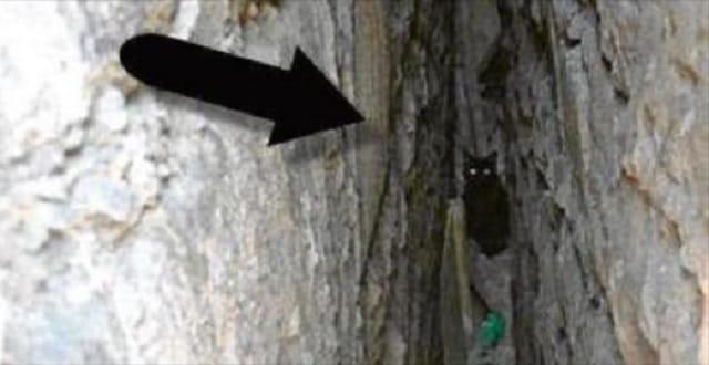 Black Cat Gets Stuck Between Two Walls!