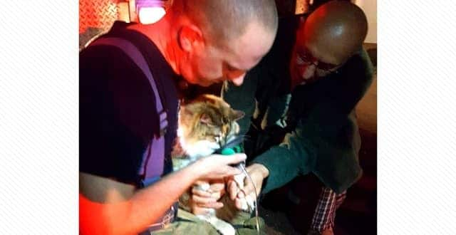 Fire Victim 'So Moved' by Firefighters' Rescue of Her Family's Beloved 18-Year-Old Cat!