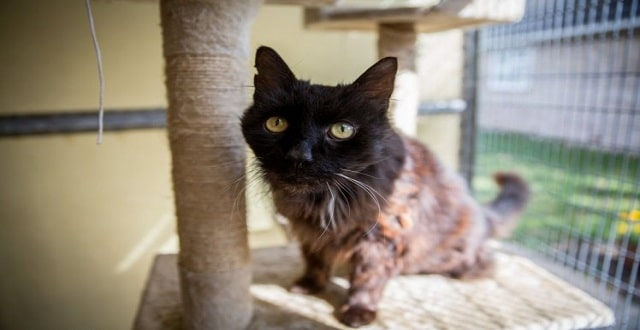 Dumped Cat Turns Out to Be a Possible Record Breaker!