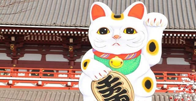 7 Purr-fect Cat-themed Attractions Around the World!