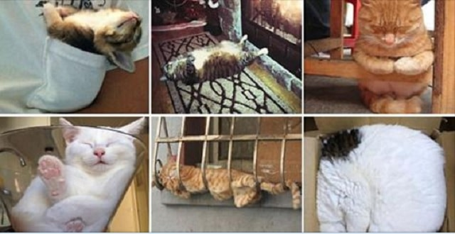 19 Hilarious Photos Proving Cats Truly CAN Sleep Anywhere!