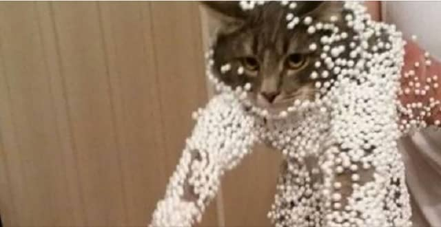 15 Hilarious Cat Fails That Will Have You Falling Out Of Your Chair!