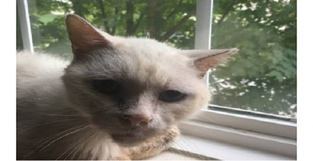 Pennsylvania Cat Reunited With Owner After 8 Years!