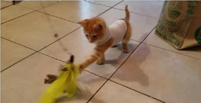 Kitten With Congenital Defect Now Plays Normally Thanks to Owner's Inventive Idea!