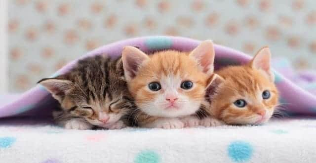 Palm Beach County to Consider Banning Puppy, Kitten Sales at New Pet Shops!