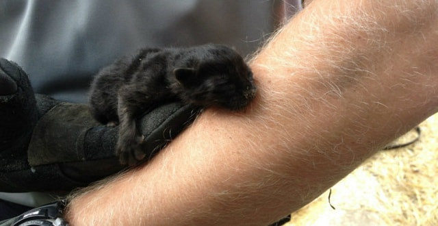 Firefighters Rescue 2-day Old Kitten Trapped in Pipe!