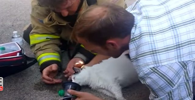 Firefighters Bring Cat Back to Life After Pulling Her From Burning House
