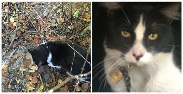 Cat Cruelly Chained and Padlocked Stranded In The Woods!