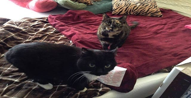 Couple Helps 2 Senior Cats From Same Mother Spend Their Final Years Together!