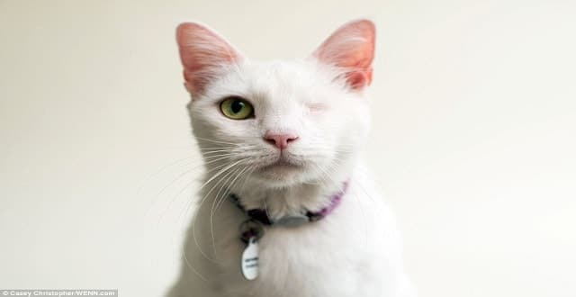 Photographer Beautifully Captures Photos of Cats Who Have Lost Their Eyes To Help Them Get Adopted!