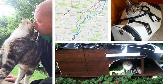 Remarkable Tale of Lola the Missing Cat, the Smitten Garage staff and Her Harrowing Adventure!