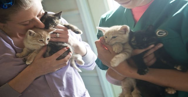 Four Kittens Stuffed in Pillowcase, Thrown from Vehicle into Mississippi, and the Angel That Saved Them.