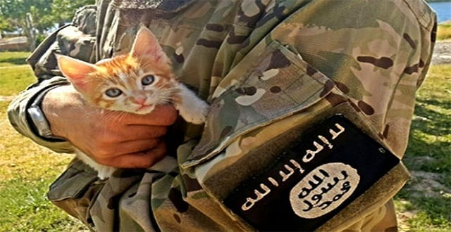 ISIS Declares Fatwa Against Cats Because They're Against Their 'Vision and Beliefs'!