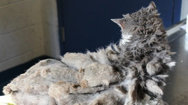 Lonely Cat Who Couldn't Even Walk Under All That Matted Fur 2