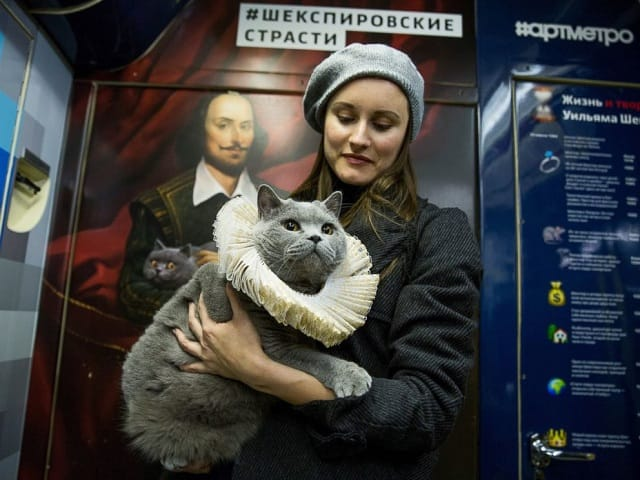 A British Shorthair cat in a car of a train marking the 400th anniversary of William Shakespeare's death put into service on the Arbatsko-Pokrovskaya Line of the Moscow Metro, Oct. 12, 2016.