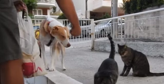 Rescue Dog Helps Her Owners Feed the Stray Cats in Her Neighborhood!