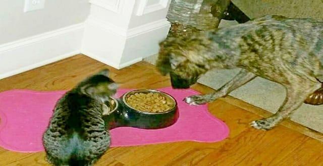 UPDATE – Stowaway Cat Heading Home from Georgia Thrift Store!