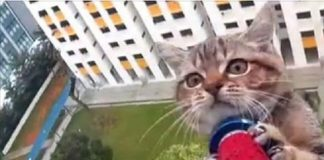 High Rise Feline Rescue Drama Caught on Video!