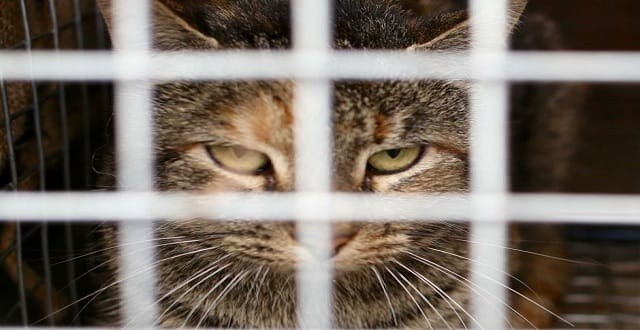 Kangaroo Island's Plan to Eradicate All Cats, This Includes Pet Cats!