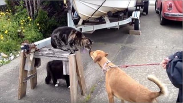 These Cats Were Fine With the First Dog, But NOT With the Second Dog!
