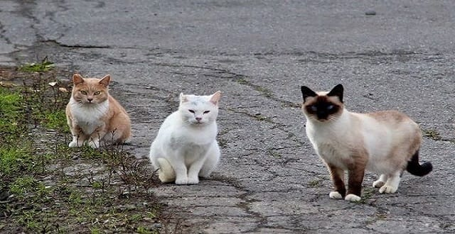 Stray Cat Patrol: Multitudes of Feral Cats Deployed in NYC War on Rats!