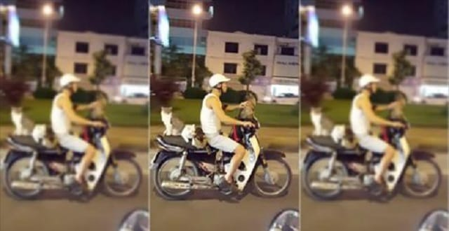 Cat Whisperer Rides His Motorcycle with His 4 Chill Cats!