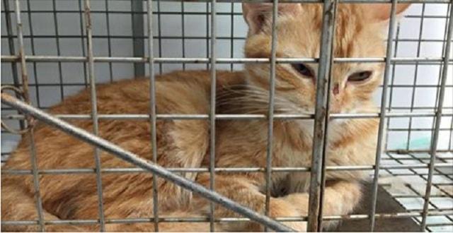 Nashville Receives Huge Grant to Help Neighborhood Cats!