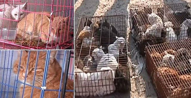 The Day 1,300 Cats Were Rescued!