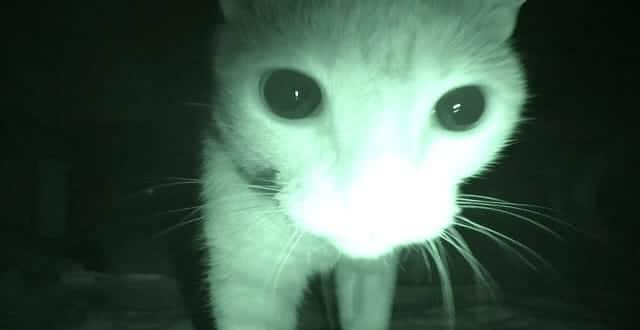 Cats Don't Sleep at Night! Here's What They Do Instead!