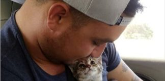 The Moment This Rescue Kitten Realized He Finally Had a Forever Home is Too Sweet!