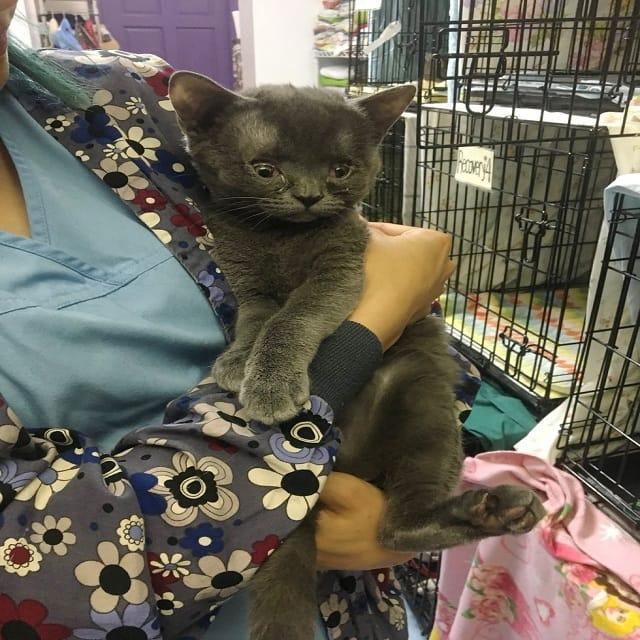 cat-born-special-2-min