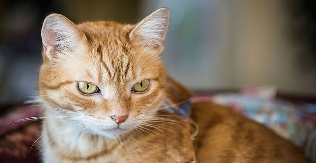 Cat Found with Arrow Through Head – And Survives!