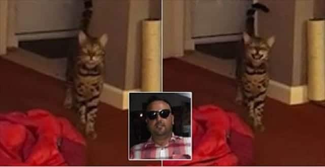 Adorable Moment Maximus the Singing Cat Performs Duet of The Outhere Brothers Hit with His Human!