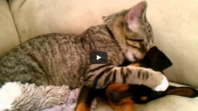 Kitty Helps Sick Dog Get Better With Some TLC!