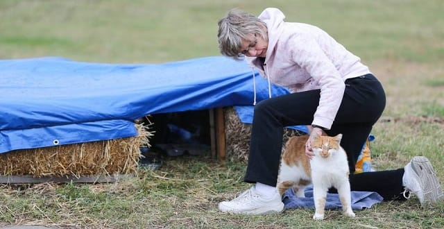 Injured Feral Cat Finds Many Human Friends!