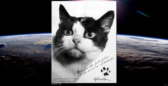 Meet Félicette – the Very First — And Only — Cat in Space!