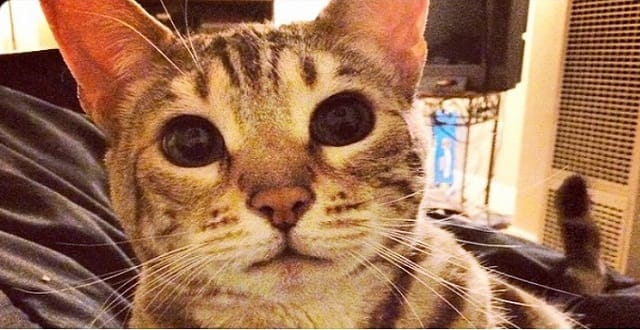 27 Hair Ties Found in This Cat's Stomach!