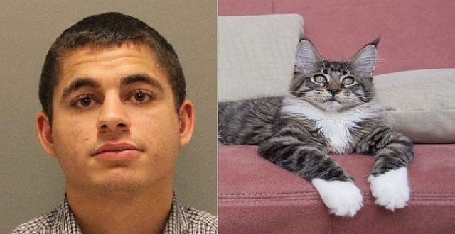 San Jose Cat Killer Faces 16 Years in Prison!