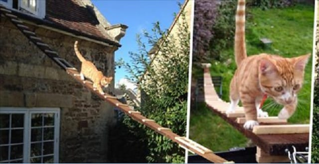 Cat Lover Creates Homemade Ladder For His Cat After his Landlord Banned Him from Having a Catflap!