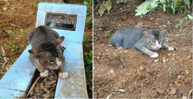 Cat Visits Her Owner's Gravesite Each and Every Day, Showing Her Undying Loyalty!