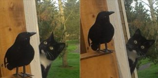 GALLERY: Very Curious Cat Discovers Fake Bird, Hilariously Begins to Question the Meaning of Life!