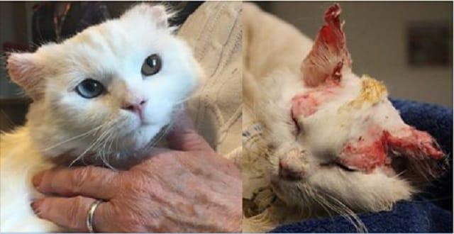 Burned Cat Finds Home In Human Burn Survivor